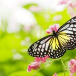 Compliance Programs and the Butterfly Effect